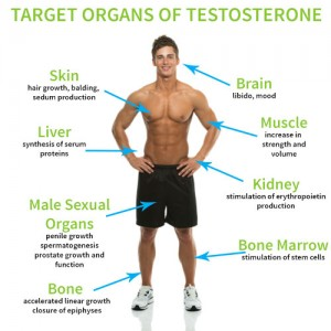 Testosterone Supplements Side Effects